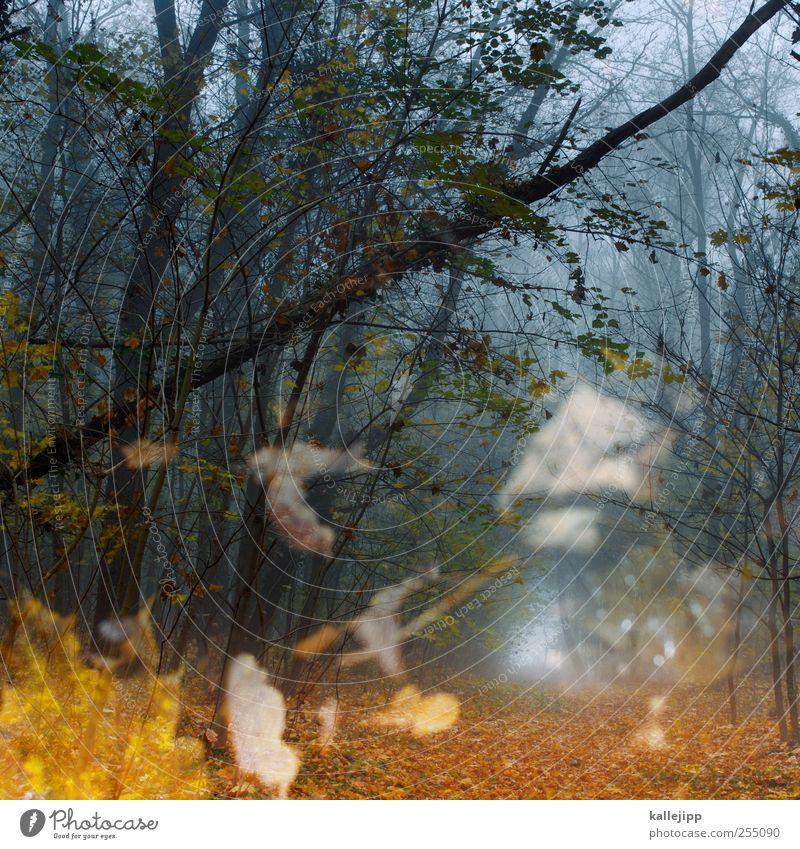 fall Natur Baum Pflanze Blatt Tier Wald Umwelt Landschaft Luft Wetter Nebel Klima Ziel fallen Fußweg unheimlich