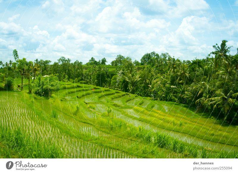 Terassenbau Himmel Natur grün Sonne Sommer Wolken Umwelt Landschaft Leben Wetter Feld Insel Wachstum Zukunft Hügel Schönes Wetter