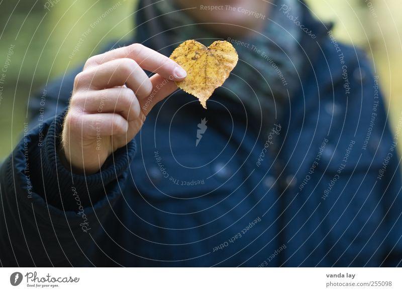 Herz Mensch Natur Mann Hand Pflanze Blatt Erwachsene Liebe gelb Herbst Romantik Wellness festhalten Kitsch zeigen