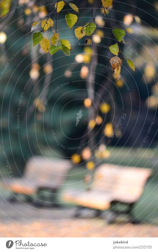 sonniges Plätzchen Herbst Baum Blatt Birke Birkenblätter Zweige u. Äste Garten Park ruhig Einsamkeit Parkbank Bank Sonnenstrahlen 2 Herbstlaub Farbfoto
