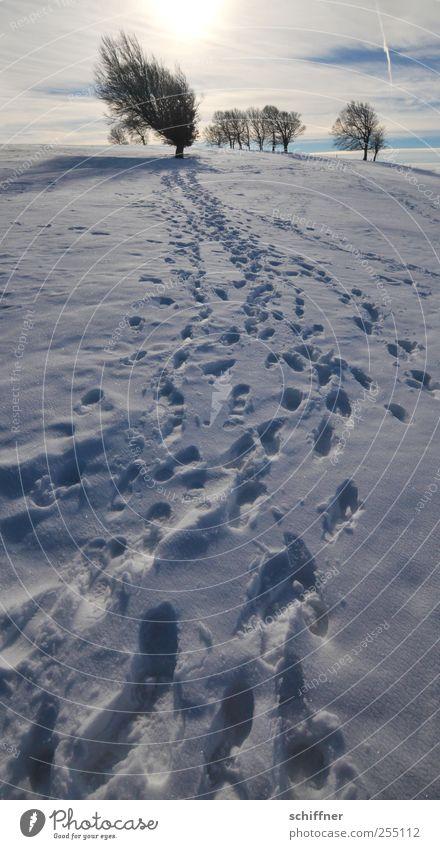 Weg Buchen Himmel Baum Pflanze Sonne Winter Wolken Umwelt Landschaft kalt Schnee Berge u. Gebirge Eis Urelemente Frost Schönes Wetter Spuren