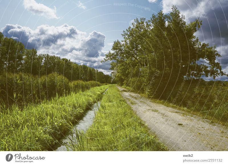 Grünstreifen Umwelt Natur Landschaft Pflanze Luft Wasser Himmel Wolken Horizont Sommer Schönes Wetter Baum Gras Sträucher Wiese Wald Wege & Pfade grün Idylle
