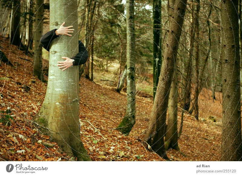 Baumliebe. Mensch Arme Hand 1 Natur Herbst Blatt Wald Hügel Umarmen Glück Geborgenheit Warmherzigkeit Begierde Gefühle Zufriedenheit Farbfoto Außenaufnahme