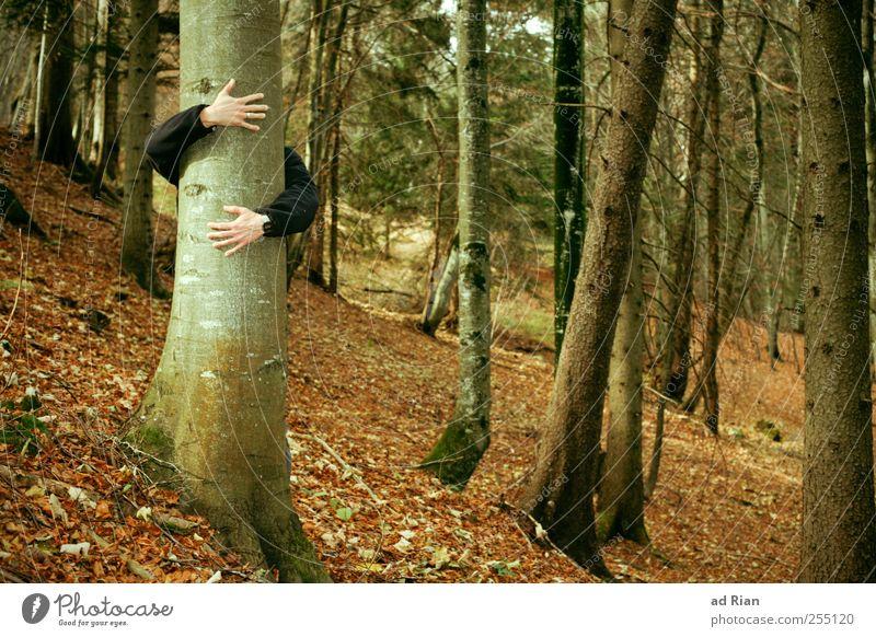 Baumliebe. Mensch Natur Hand Blatt Wald Herbst Gefühle Glück Zufriedenheit Arme Hügel Warmherzigkeit Geborgenheit Begierde Umarmen