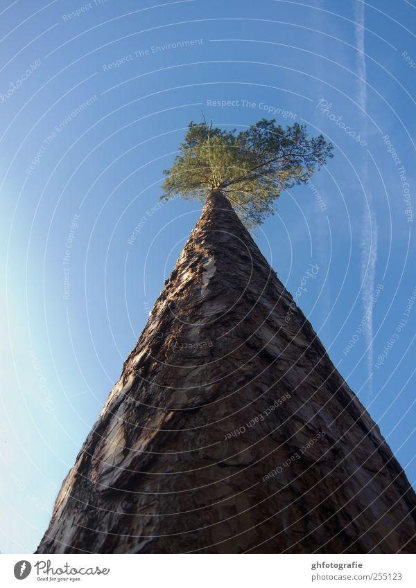 aufwärts Himmel Natur Baum Pflanze Tier Einsamkeit Ferne Macht Hoffnung Mut Willensstärke Optimismus demütig