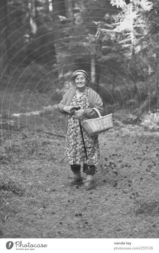 Pilzoma Ausflug wandern Frau Erwachsene Weiblicher Senior Großmutter 1 Mensch 60 und älter Umwelt Natur Herbst Baum Wald Kleid Kopftuch tragen pilze Pilzsucher