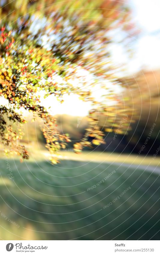 Altweibersommer Indian Summer September Vogelbeerbaum Herbstbeginn natürlich Vogelbeeren Herbstlandschaft Wegrand Warmes Licht Bewegung Herbstwetter Oktober