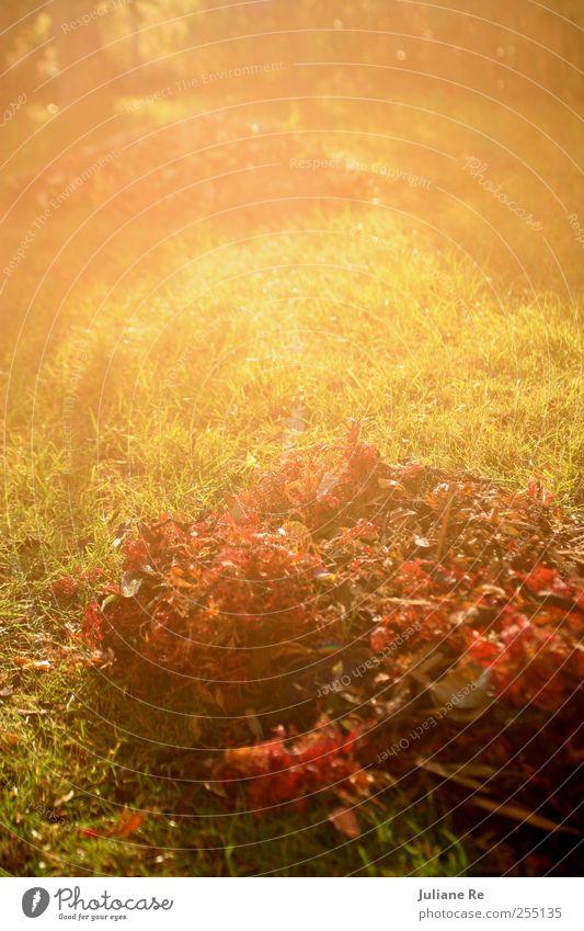Herbstlaub | Sonne Natur Baum Pflanze Blatt Erholung Umwelt Wiese träumen Park Erde Wetter Klima Wachstum leuchten