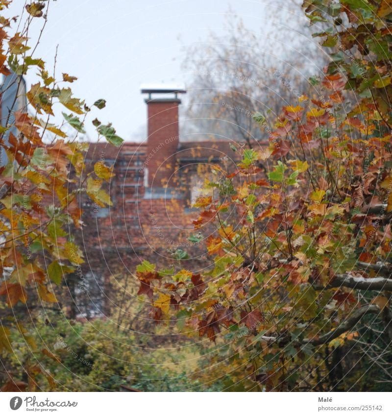 verwunschen Herbst Nebel Baum Heidelberg Deutschland Europa Haus Dach Schornstein geheimnisvoll Farbfoto Außenaufnahme Morgen