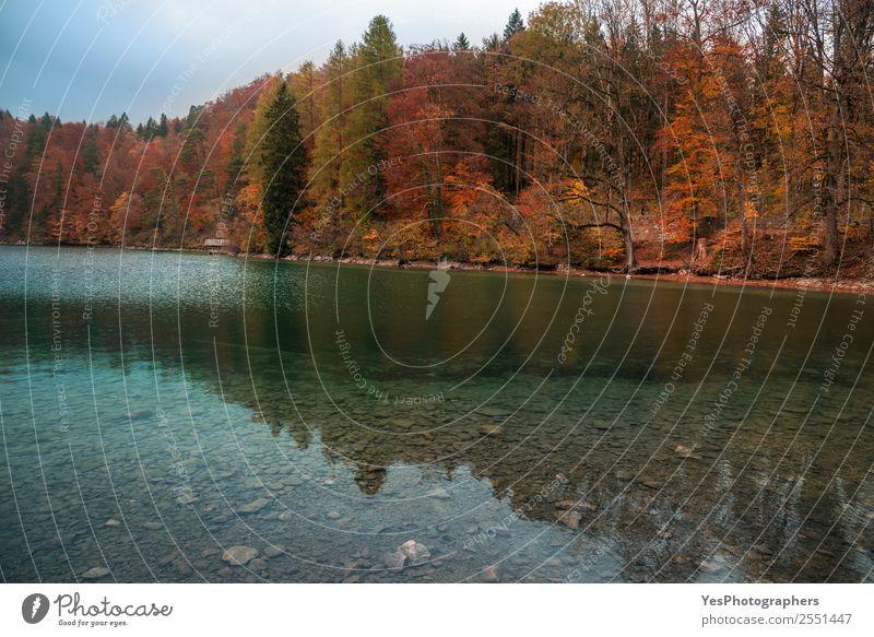 Natur Ferien & Urlaub & Reisen schön Landschaft Blatt Wald natürlich Deutschland See Europa Sehenswürdigkeit Örtlichkeit Herbstlaub Bayern