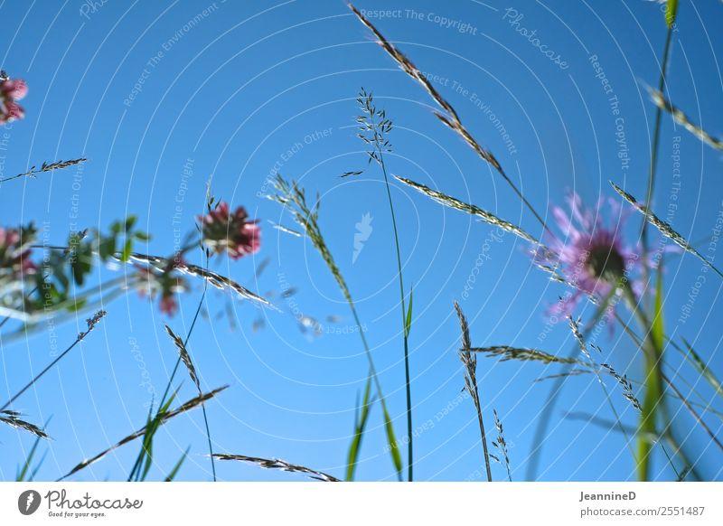 zarte Wiesenblumen II Sinnesorgane Freiheit Sommer Picknick Garten wandern Yoga Kind lesen Pflanze Frühling Schönes Wetter Blume Gras Schmetterling Käfer