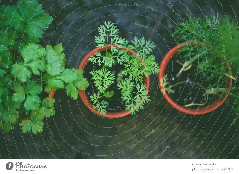 Frische Bio Garten Kräuter Natur Essen Lifestyle Leben Lebensmittel Zufriedenheit Ernährung Wachstum Blühend Kräuter & Gewürze Wohlgefühl harmonisch Bioprodukte