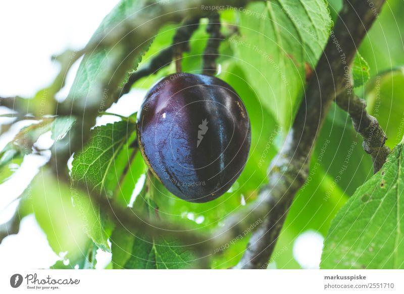 Bio Pflaume Zwetschge Natur Ferien & Urlaub & Reisen Gesunde Ernährung Gesundheit Essen Leben Lebensmittel Umwelt Garten Tourismus Ausflug Frucht