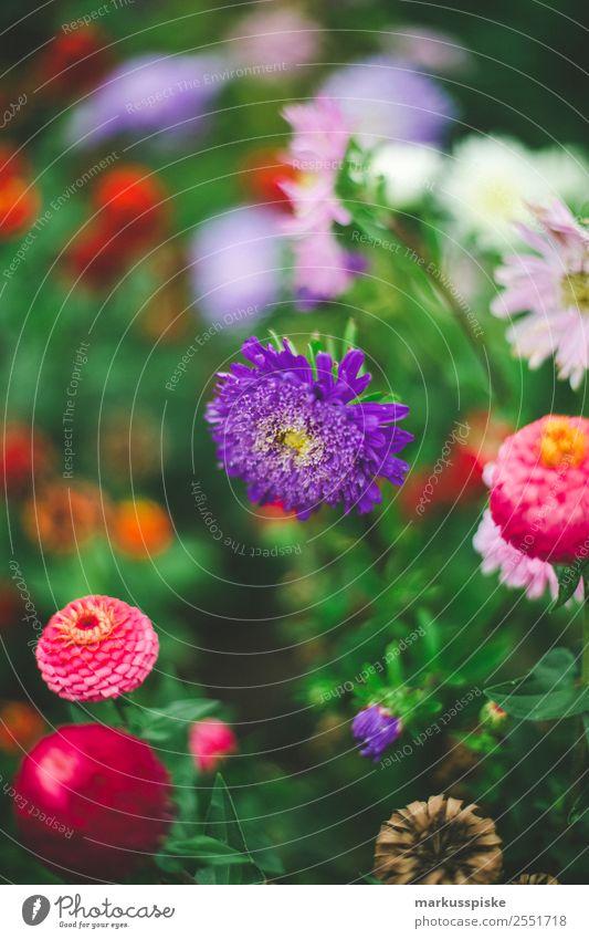 Blühender Blumen Garten Sommer Pflanze Erholung Tier Blatt ruhig Lifestyle Frühling Blüte Stil Zufriedenheit Freizeit & Hobby Park elegant
