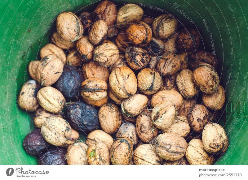 Walnuss Ernte Natur Gesunde Ernährung Pflanze Baum Erholung ruhig Essen Lifestyle Lebensmittel Garten Freizeit & Hobby genießen Sammlung ansammeln