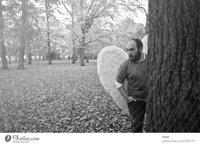 Engel Mensch maskulin Mann Erwachsene 1 30-45 Jahre Umwelt Natur Pflanze Urelemente Erde Herbst Baum Blatt Park Wald Flügel stehen außergewöhnlich Hoffnung
