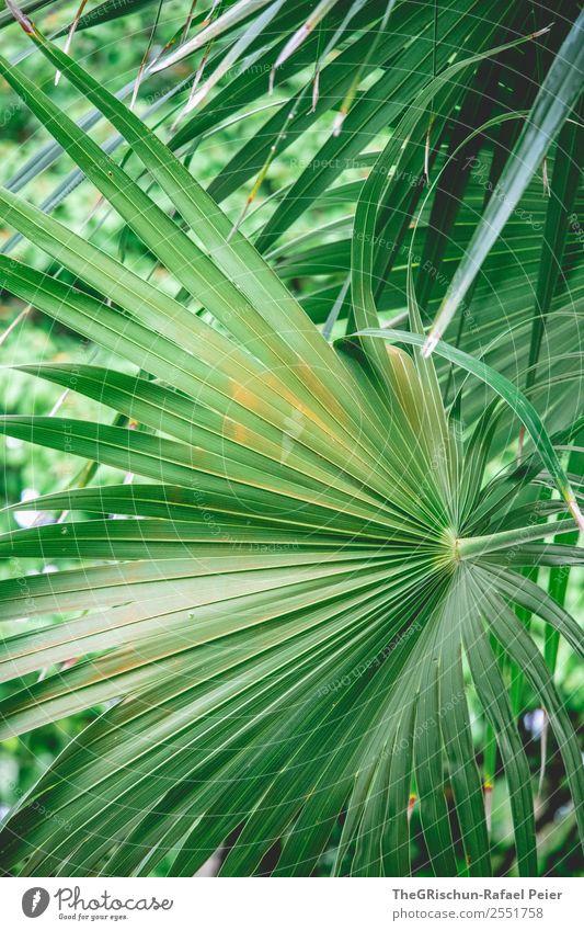 Palmblatt Natur grün orange Palme Blatt Detailaufnahme Makroaufnahme Nahe Pflanze Strukturen & Formen Muster Farbfoto Außenaufnahme Menschenleer Tag