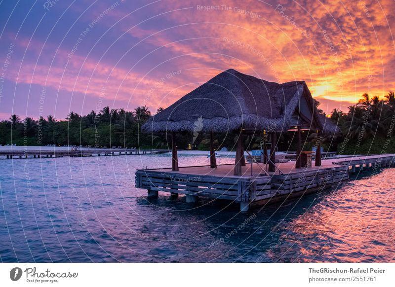 Steg Natur blau violett orange rosa schwarz Malediven Insel traumhaft Traumreise Palme Wärme Himmel Stimmung Sonnenuntergang Ferien & Urlaub & Reisen