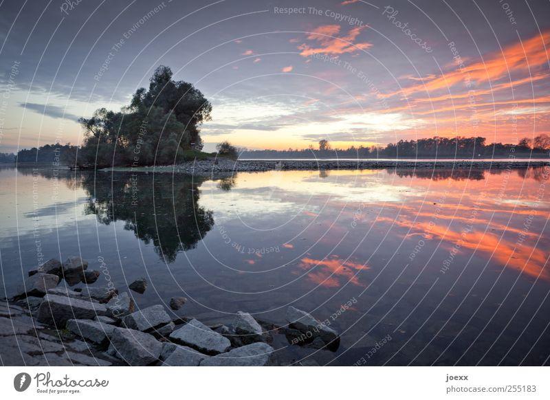 Alte Ufer Natur Landschaft Wasser Himmel Wolken Horizont Sonnenaufgang Sonnenuntergang Sommer Schönes Wetter Baum Seeufer Flussufer Stein blau gelb violett rot