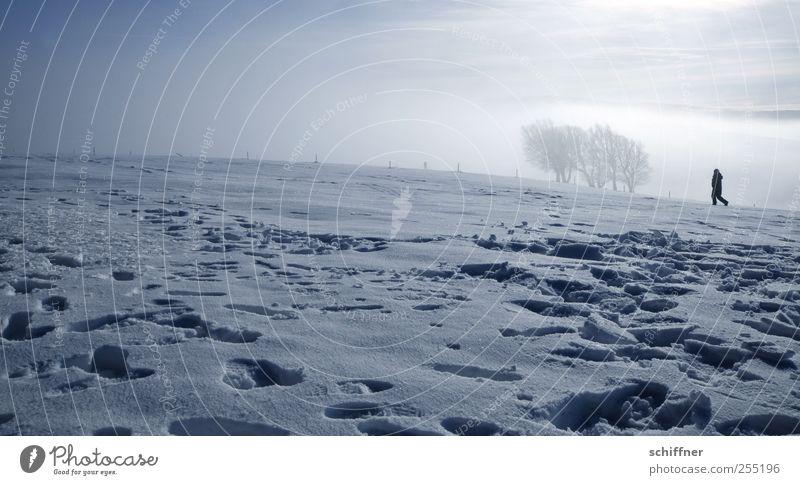 Nebel Buchen 1 Mensch Natur Landschaft Sonnenlicht Winter Schönes Wetter Eis Frost Schnee Baum Hügel Berge u. Gebirge Gipfel kalt Einsamkeit Wäldchen