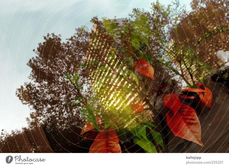 windows vista Pflanze Baum Haus Hochhaus leuchten Leipziger Straße Weihnachtsstern Blume grün rot Farbfoto mehrfarbig Außenaufnahme Innenaufnahme Licht Schatten