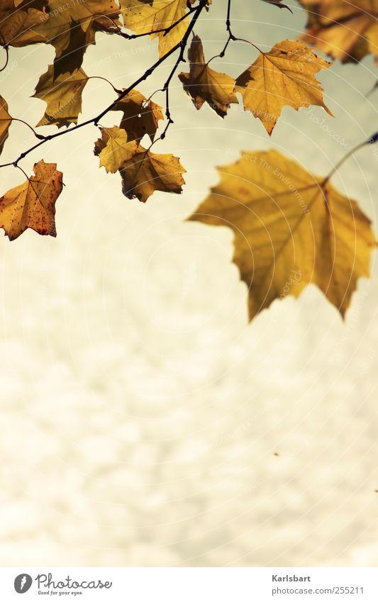 Die Mücke, die ihr Sommerlied singt ... Umwelt Natur Pflanze Himmel Wolken Herbst Wetter Sturm Baum Blatt Park gelb gold Bewegung Farbe Stimmung Vergänglichkeit