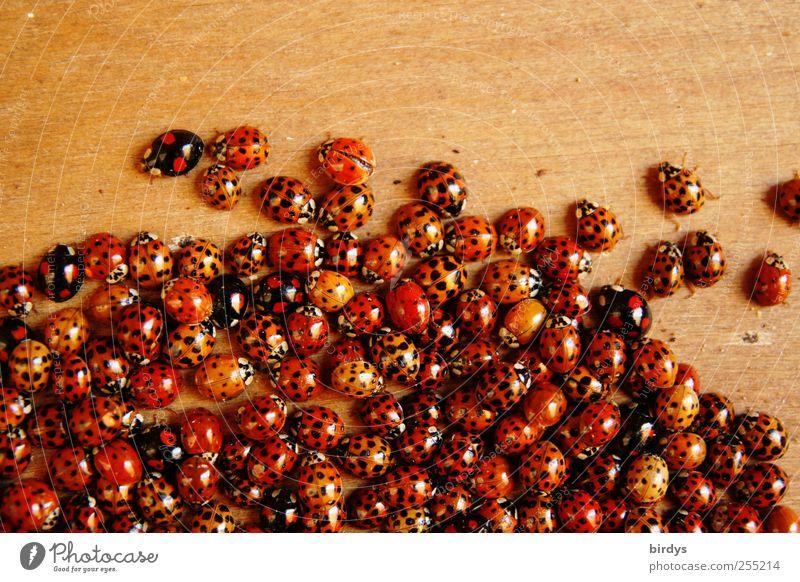 Krabbelgruppe Natur schön rot Herbst Glück Zusammensein außergewöhnlich Tiergruppe viele Warmherzigkeit Insekt Punkt Teamwork positiv Käfer Verschiedenheit