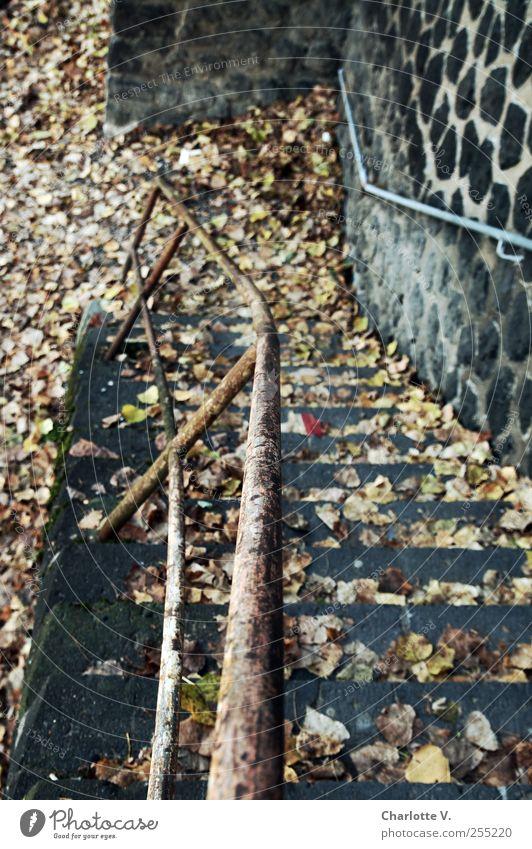 Abwärts Herbst Blatt Treppe Treppengeländer Stein Beton Metall Rost dunkel kaputt trashig trist braun grau Einsamkeit Endzeitstimmung herbstlich Herbstlaub