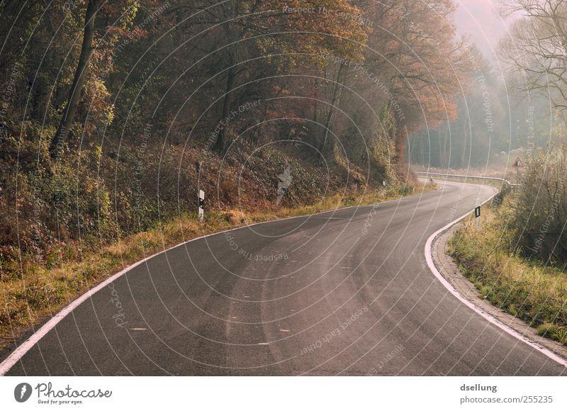 Was dahinter liegt, bleibt verborgen grün Pflanze Landschaft ruhig Wald Straße Herbst natürlich braun frei Schönes Wetter weich Spannung Vorfreude friedlich Landstraße
