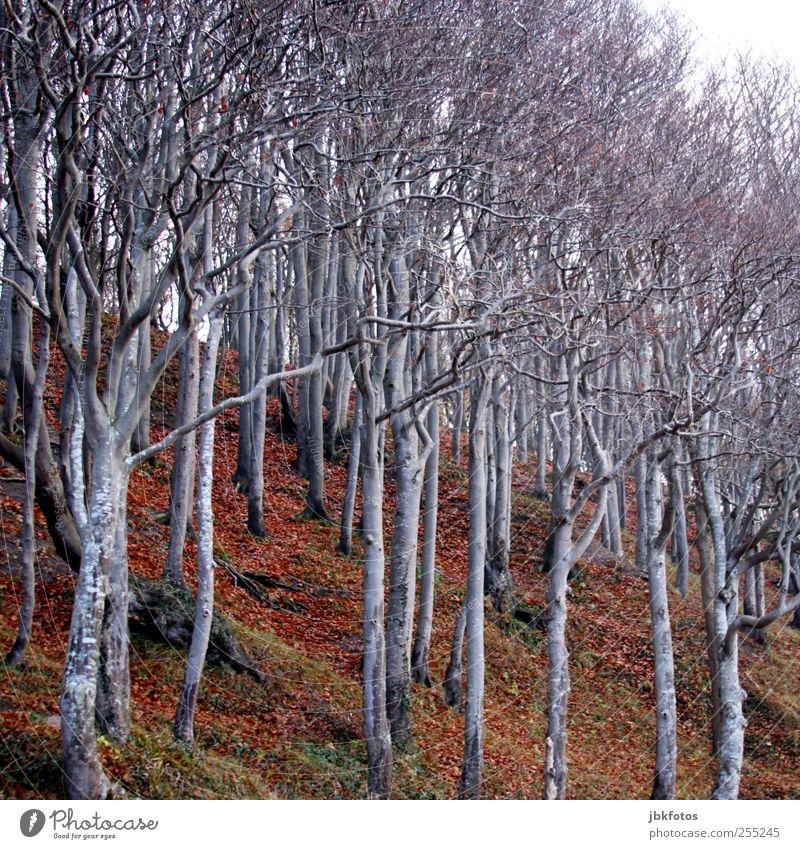 Solidarische Grüße ins Wendland Natur Baum Pflanze Wald Umwelt Landschaft Erde Sträucher Baumstamm Risiko Baumkrone Berghang blockieren Unterholz Buchenwald