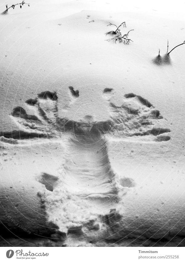 100. (Schwarzwälder Schneeadler) Natur Weihnachten & Advent weiß Freude Winter kalt Berge u. Gebirge Umwelt Leben Gefühle Spielen grau Freizeit & Hobby