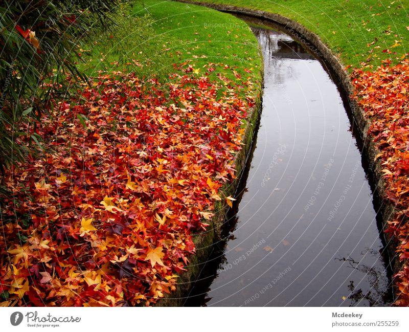 Bunter Fleckenteppich Natur grün weiß Baum Pflanze rot Blatt schwarz gelb Herbst Wiese kalt Umwelt Landschaft grau Gras