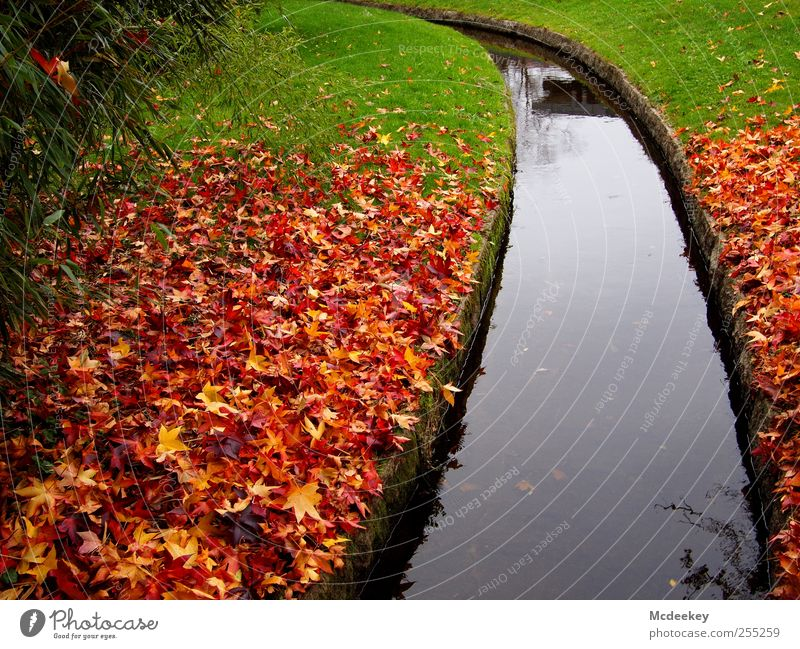 Bunter Fleckenteppich Umwelt Natur Landschaft Pflanze Herbst Baum Gras Sträucher Blatt Grünpflanze Park Wiese authentisch exotisch kalt nass natürlich braun