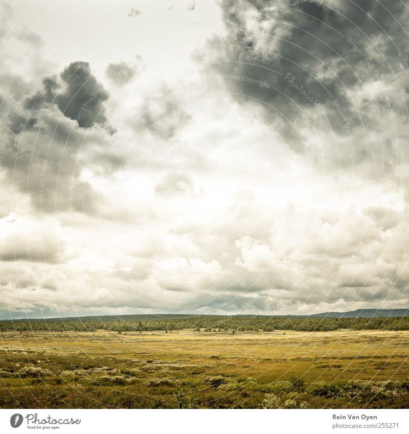 Breite Umwelt Natur Landschaft Pflanze Himmel Wolken Horizont Gras Sträucher Feld Hügel ästhetisch Ferne schön Stimmung Gelassenheit ruhig Farbfoto
