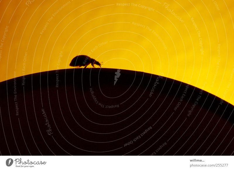 auf dem bauch des riesen... Einsamkeit schwarz gelb Lampe Zufriedenheit laufen wandern Hoffnung Ziel Hügel Neugier Wissenschaften entdecken aufwärts Käfer