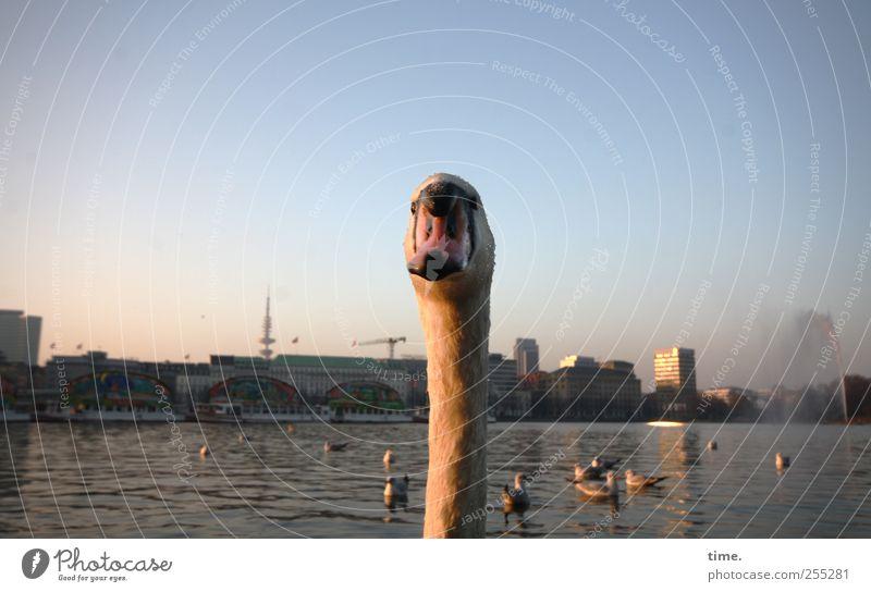 Mein lieber Schwan! Himmel Wasser schön Stadt Tier Leben Horizont Hintergrundbild Hochhaus Tourismus Hamburg Neugier Idylle Skyline Gelassenheit Hals