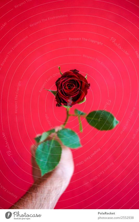 #S# Rote Rose II Glück rot schenken Valentinstag Liebe grün geben Hand Freude Frühlingsgefühle schön außergewöhnlich Geschenk Gefühle Partner Liebeserklärung