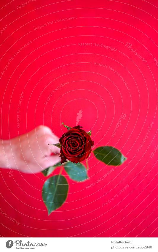 #S# Rote Rose IV Glück rot schenken Liebe Liebeserklärung grün Valentinstag Hand herzlich Freundschaft Liebesgruß Symbole & Metaphern Muster geben schön