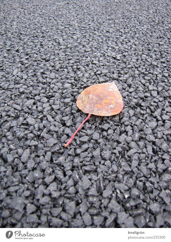 Allein gelassen Natur Pflanze Blatt Einsamkeit schwarz Herbst Umwelt Gefühle Wege & Pfade braun liegen natürlich Vergänglichkeit Ende Asphalt Teer
