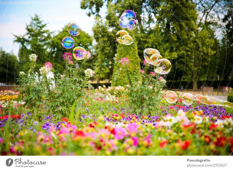 Seifenblasen im Park Kinderspiel Pflanze Sommer Schönes Wetter Blume Gras Sträucher Blühend glänzend leuchten Fröhlichkeit rund Kitsch Leichtigkeit mehrfarbig