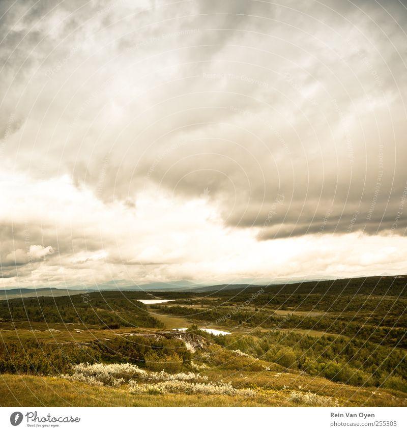 Länder der Gelassenheit Umwelt Natur Landschaft Pflanze Erde Himmel Wolken Horizont Sommer Herbst Klima Wetter Gras Sträucher Moos Feld Wald Hügel