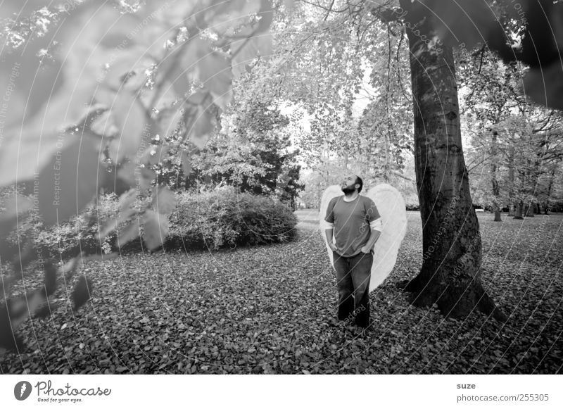 Engel Mensch maskulin Mann Erwachsene 1 30-45 Jahre Umwelt Natur Pflanze Urelemente Erde Herbst Baum Blatt Park Flügel stehen außergewöhnlich Hoffnung Glaube