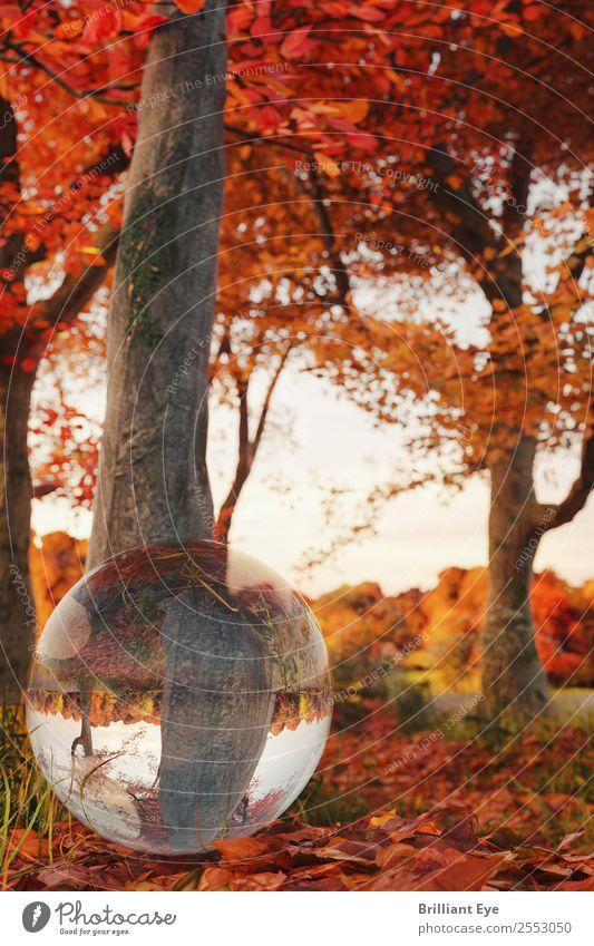 Herbstlich rund Leben Natur Landschaft Baum Blatt hell klein natürlich mehrfarbig gelb rot authentisch herbstlich Laubbaum Glaskugel Reflexion & Spiegelung