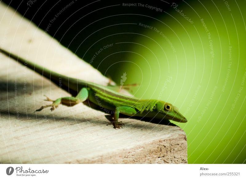 Ein Augenblick Tier Wildtier 1 bedrohlich Geschwindigkeit Kontakt Leben Mut Natur Neugier Ferien & Urlaub & Reisen Schutz Umwelt Wandel & Veränderung