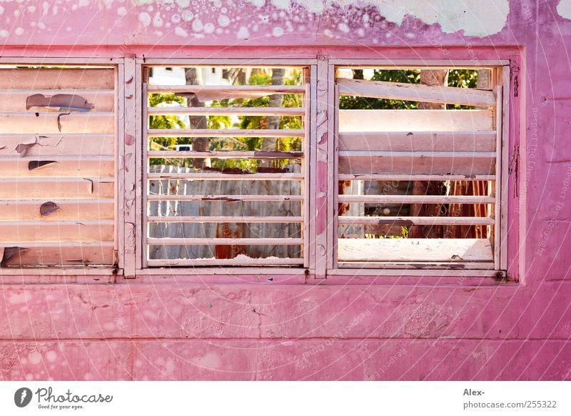 Rosige Aussichten alt Haus Fenster Gebäude rosa ästhetisch verfallen Hütte Verfall schäbig Ruine Bildausschnitt Unbewohnt Durchblick Holzwand Fensterblick