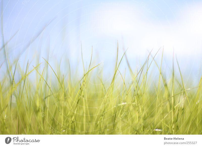 Für dich soll's bunte Bilder regnen! Himmel Natur blau grün weiß schön Sonne Sommer Wolken ruhig Wiese Gras Glück Stimmung ästhetisch Warmherzigkeit