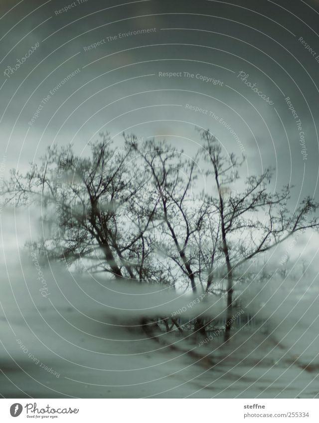 für dich solls bunte bilder regnen Baum Herbst Regen trist Pfütze