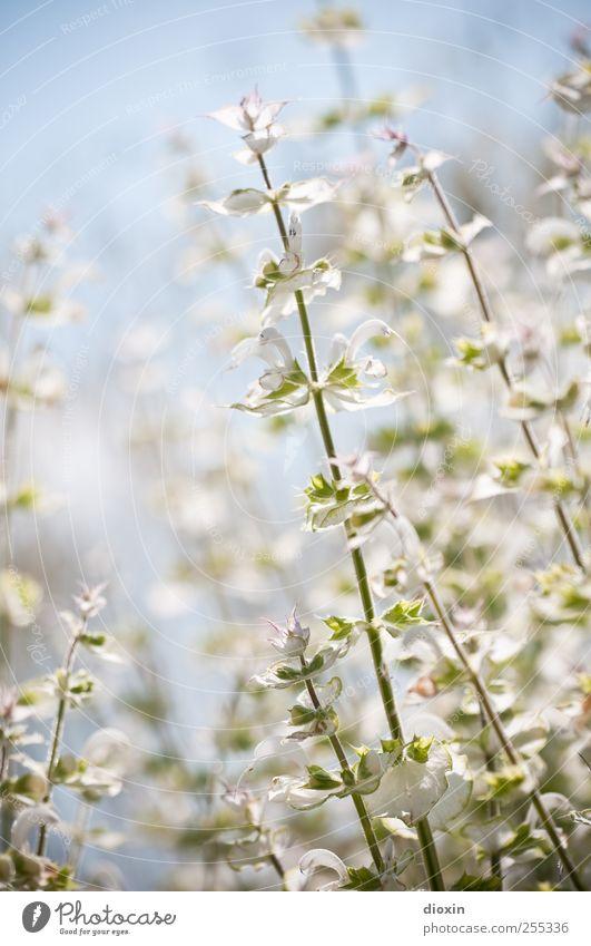 Für dich soll´s bunte Bilder regnen Umwelt Natur Pflanze Himmel Wolkenloser Himmel Sommer Schönes Wetter Blume Blatt Blüte Wildpflanze Garten Park Blühend