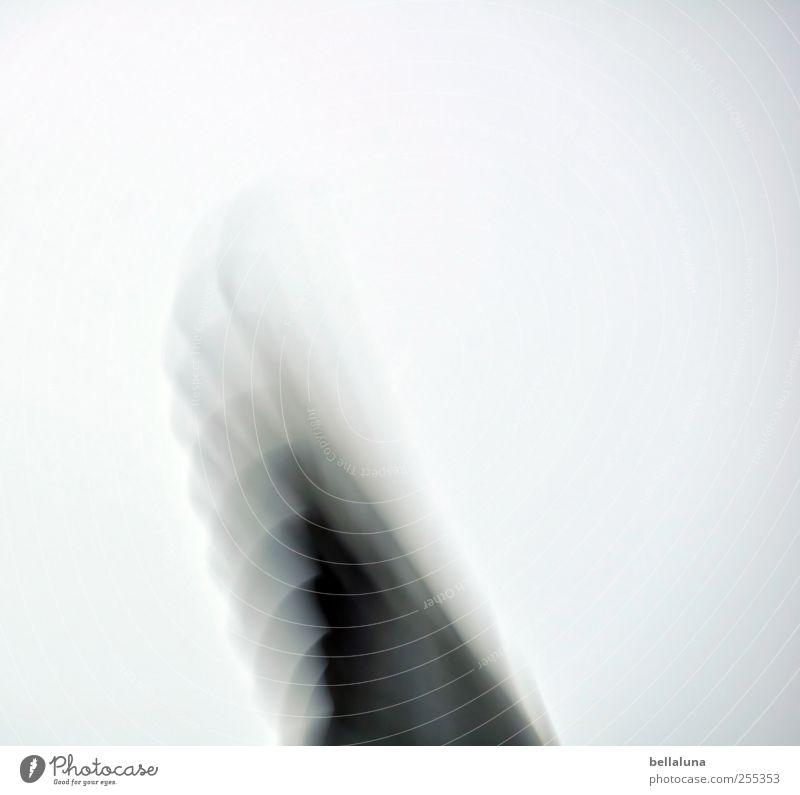 Für dich solls bunte Bilder regnen... Himmel Natur Tier Umwelt Luft Vogel fliegen Wildtier Feder Flügel Schönes Wetter Möwe Wolkenloser Himmel Federvieh