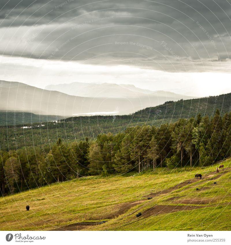Die Hügel von Pyr Gynt Umwelt Natur Landschaft Tier Himmel Wolken Horizont Sommer Herbst Feld Wald Berge u. Gebirge Nutztier Pferd 3 Tiergruppe Herde Schwarm